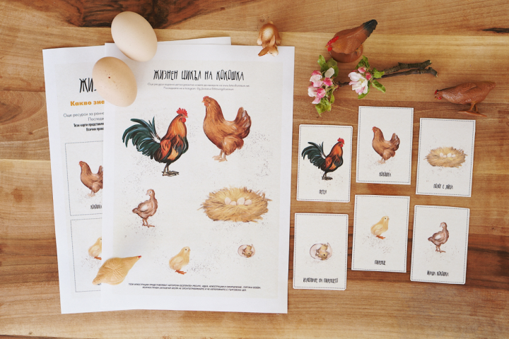 Жизнен цикъл на кокошка – Free printablepdf