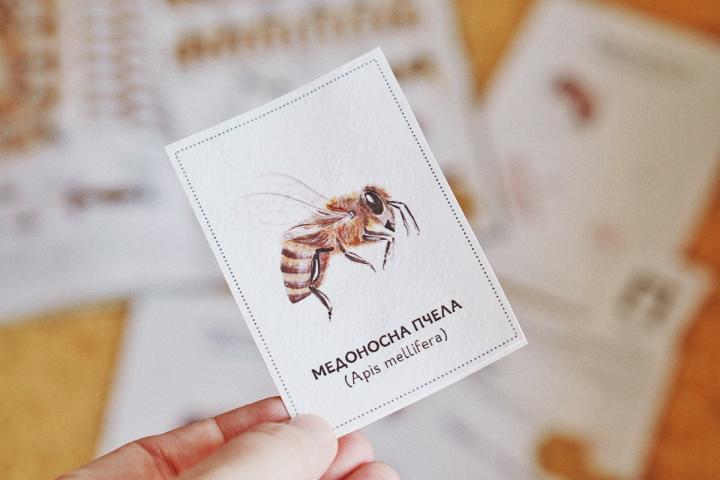 Какво се случи: Жизнен цикъл на пчела, Patreon и новмагазин